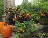 fall container garden gardening ideas pinterest