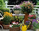 Wind- und Sichtschutz für Balkon mit Blumen und Kletterpflanzen