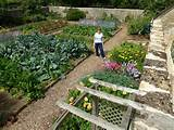 vegetable garden organic vegetable farming pinterest