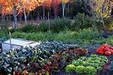 keys to planting a fall vegetable garden yahoo homes