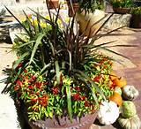 Signatur Gardens, Springsumm, Chilli Chilis, Gardens Idea, Chilis ...