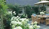 Garden ideas, landscaping Ideas, Hedges ideas, Hydrangea paniculata ...