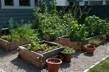 ... > Container Gardening > Container Vegetable Gardening Arizona Ideas