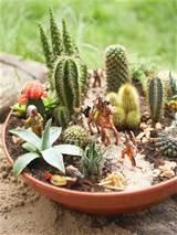 succulent container garden hgtv gardens