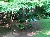 landscaping landscaping ideas wooded backyard