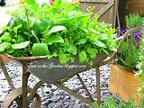 container herb garden ideas eatwell 101