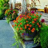 Container Garden Tips | Gardening | Pinterest