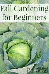 fall vegetable gardening for beginners tips for getting started with