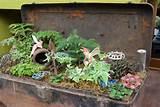 fairy gardens tonkadale greenhouse