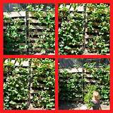if you d like to learn how to grow a delicious wall of strawberries