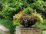 simple container gardening ideas gardening pinterest