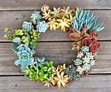 succulent summer wreath prudent baby