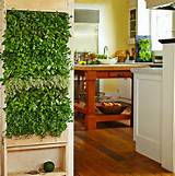 Interior miniature vertical kitchen garden