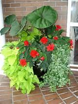 shade containers fine gardening florals gardens pinterest