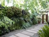 this side yard features a living wall and a walkway made of concrete