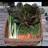 My kitchen garden harvest. | Backyard Agriculture | Pinterest