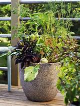 herb container garden: Container Gardens, Outdoor Plants, Growing ...