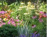 Perennial Garden - Residence - Ladue, MO