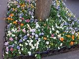 Spring in New York (via NYSD) | Gardening ideas | Pinterest