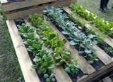 Unique Garden Ideas - KLCE Classy 97