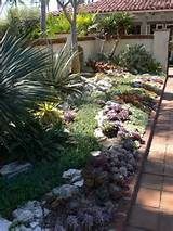Cactus garden and white wall | Home Landscaping Ideas | Pinterest
