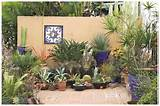 Book Report: 'Succulent Container Gardens' | Rancho Reubidoux