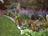 wild flower garden borders