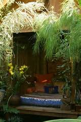jungle garden small bohemian garden exotic plants exotic bohemian