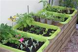 My new Vegetable Garden by The Gardening Blog