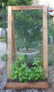 vertical gardening with a trellis