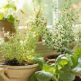 Indoor Herb Garden Kits: 18 Awesome Indoor Herb Garden Ideas Digital ...