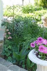 Garden Variety: Your garden - Mid-Atlantic gardening: Tips and ...