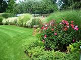 knock out roses | Gardening/Yard Ideas | Pinterest
