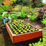 raised garden beds sunset