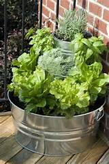 Easy salad garden! | Food | Pinterest