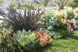 succulent landscape succulent landscaping ideas pinterest