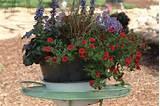 Container Gardening | Gardening Ideas I Love | Pinterest