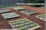 diy wood pallet garden spinach lettuce celery strawberries and