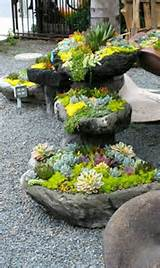 succulent rock garden green gardens flowers pinterest