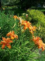 Colorful Perennial Garden | Fine Gardening