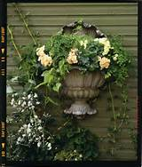 elegant wall garden for semi shade container gardening 2013 pint