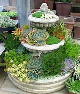... water wise succulent garden was planted in an old chicken trough