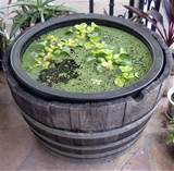 water container gardening calender of care