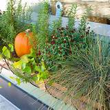 southern california gardening fall container magic