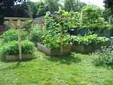 garden trellis idea gardening pinterest