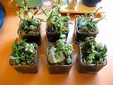 Mini succulent gardens | Flickr - Photo Sharing!