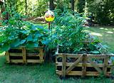 raised garden beds source awesome diy pallet raised garden ideas