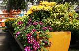 Container Garden Ideas | Projects | Pinterest