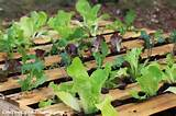 recycled pallet salad garden home tips pinterest