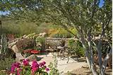 desert garden phoenix arizona garden